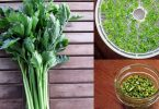 dehydrating celery in the food dehydrator