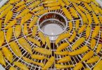 dehydrating chilies