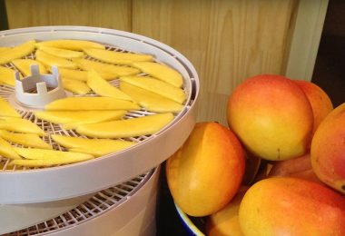dehydrating mangoes in the dehydrator