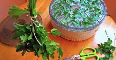 drying parsley