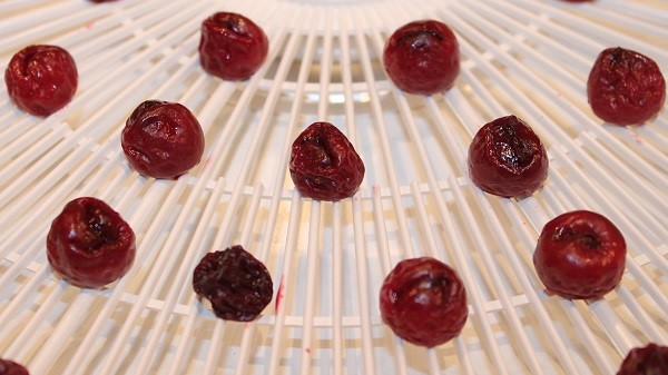 dehydrating cherries at home