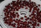 dehydrating cherries in the food dehydrator