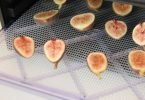 drying figs in food dehydrator