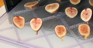 drying figs in food dehydrator