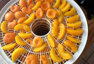 drying apricots with food dehydrator