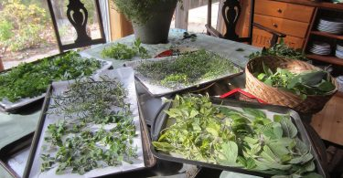 drying herbs in the oven