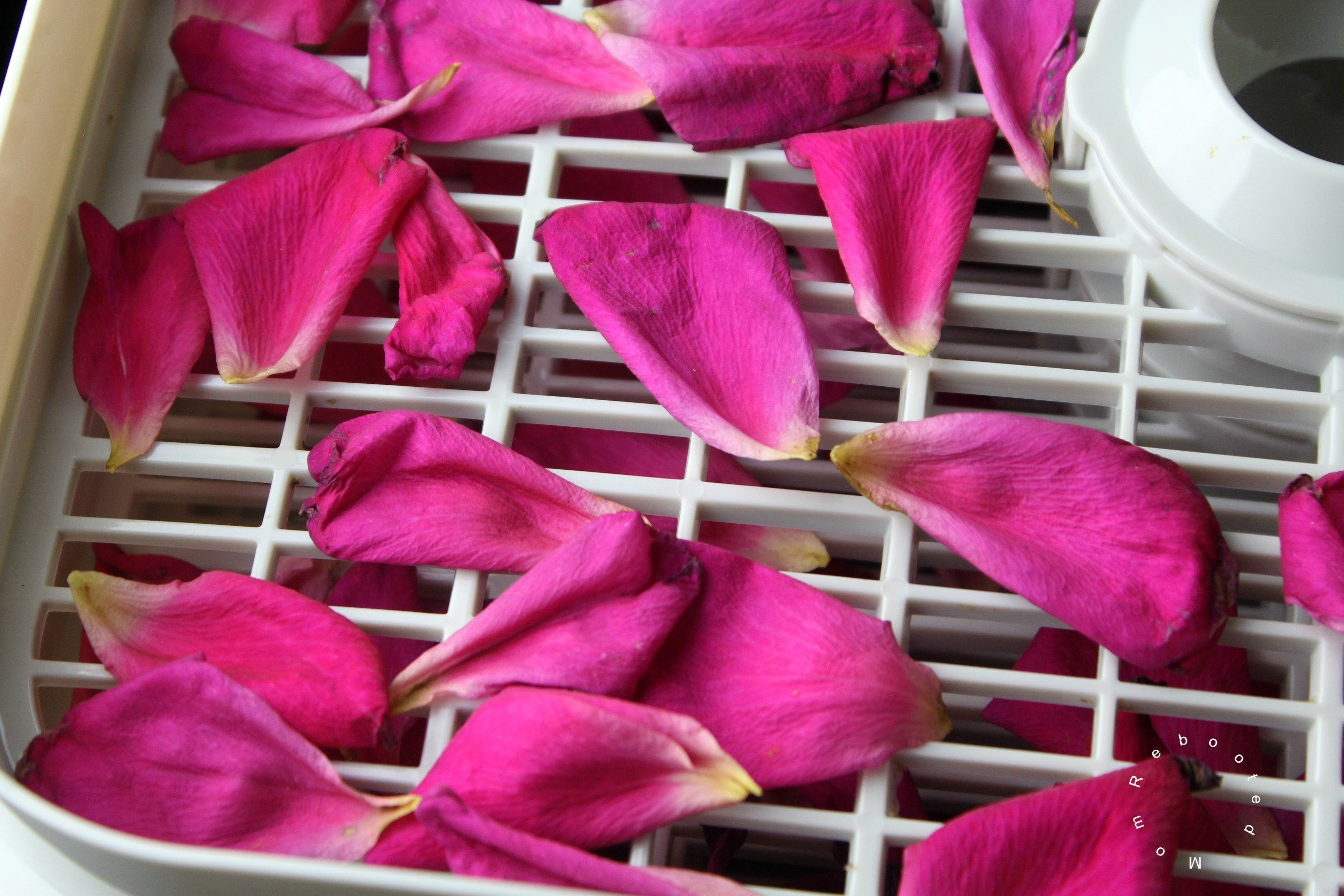 5 Easy Ways Of Drying Rose Petals Dryingallfoods