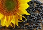 drying sunflower seeds