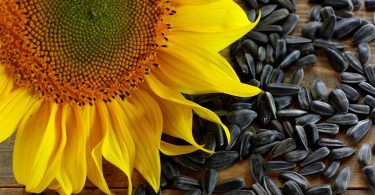 drying sunflower seeds