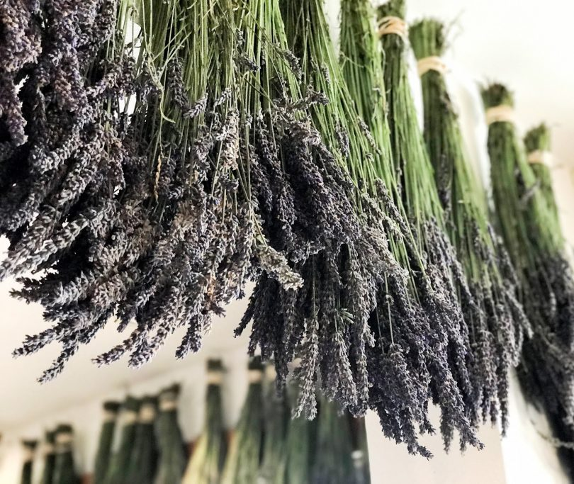 how to dry lavender flowers