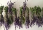 drying lavender leaves