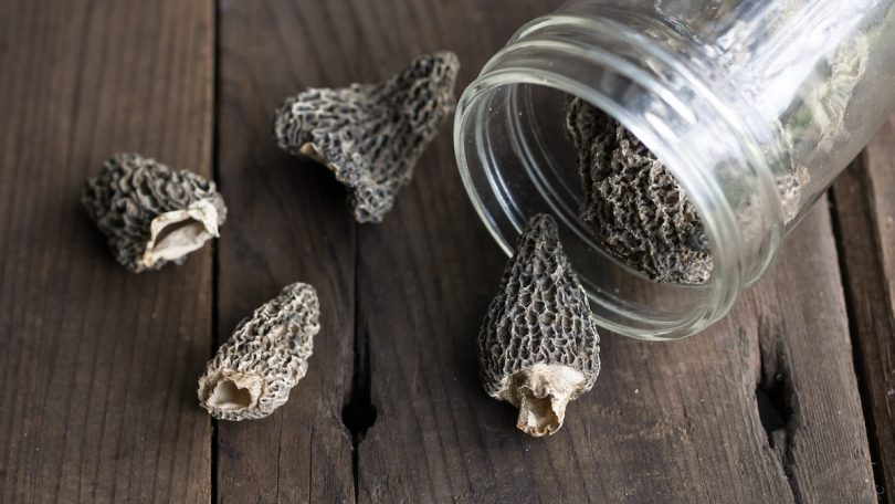 drying morel mushrooms
