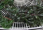 dehydrating swiss chard