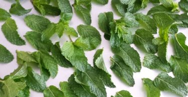 drying mint leaves for tea
