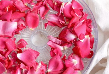 drying roses dehydrator