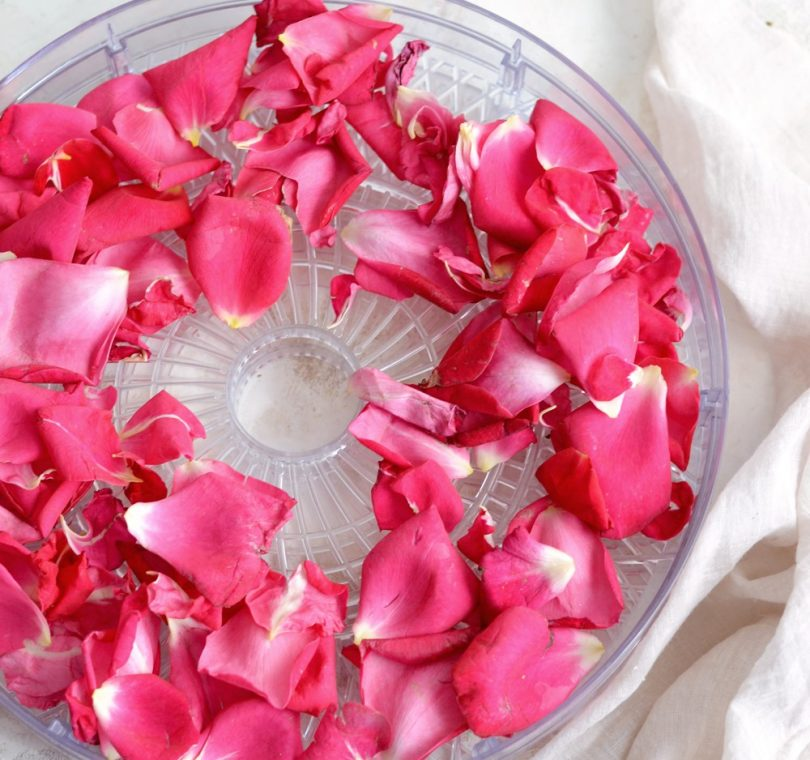 drying roses dehydrator